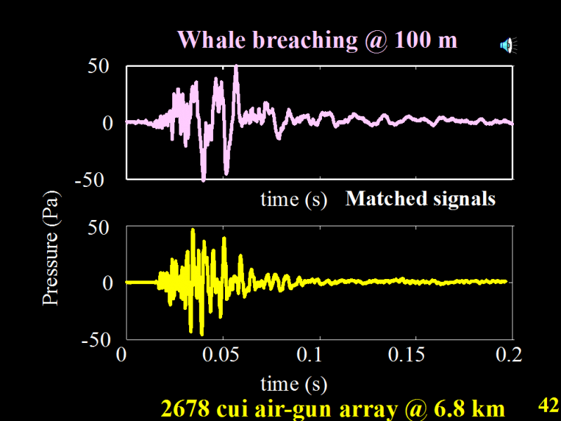 Comparison of sound energy levels of humpback breaching and seismic source